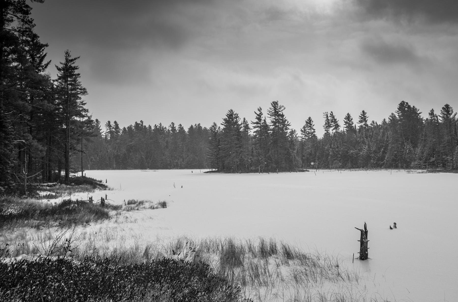 Herron Pond, Black and White
